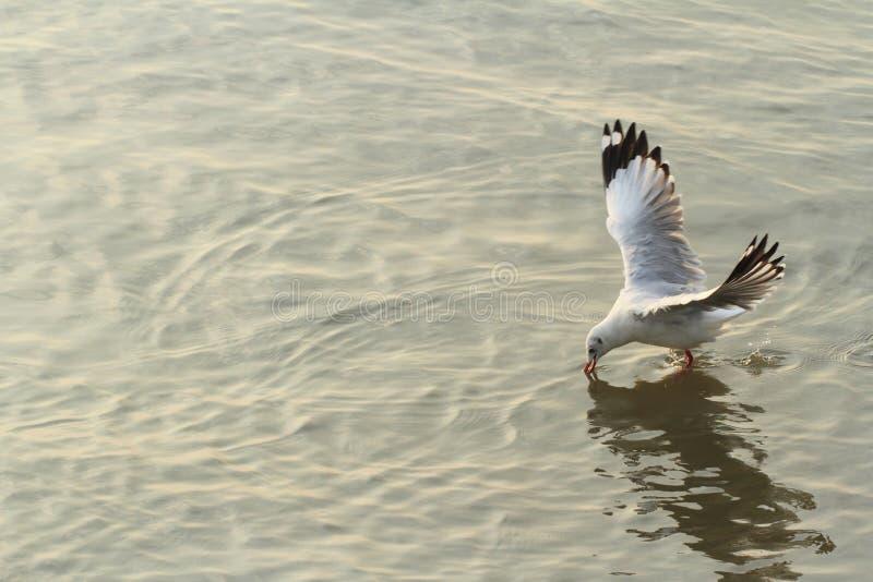 Seagulls på stranden royaltyfria bilder