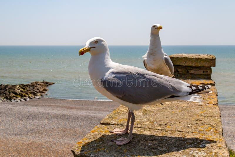 Seagulls på stranden royaltyfri bild