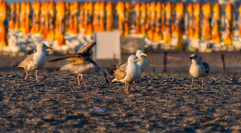Seagulls på stranden arkivfoto