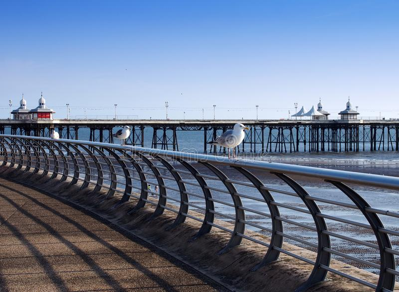 Seagulls perched on railings on the promenade in blackpool with the north pier in the background on a sunny summers day. With the beach and sea in the stock photo