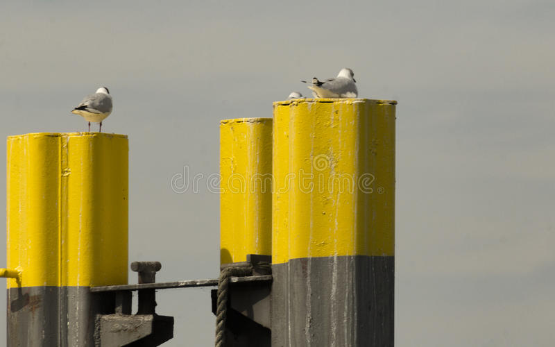 Seagulls on pier royalty free stock images