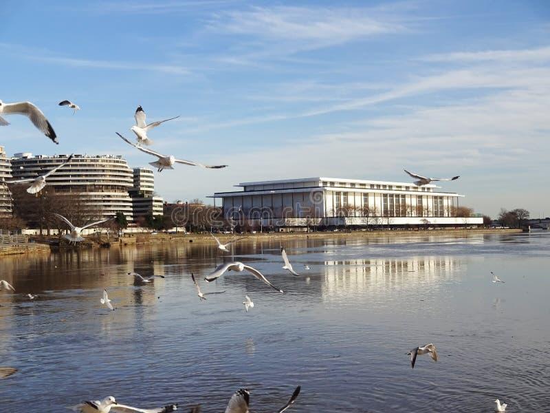 Seagulls przy nabrzeżem obraz royalty free