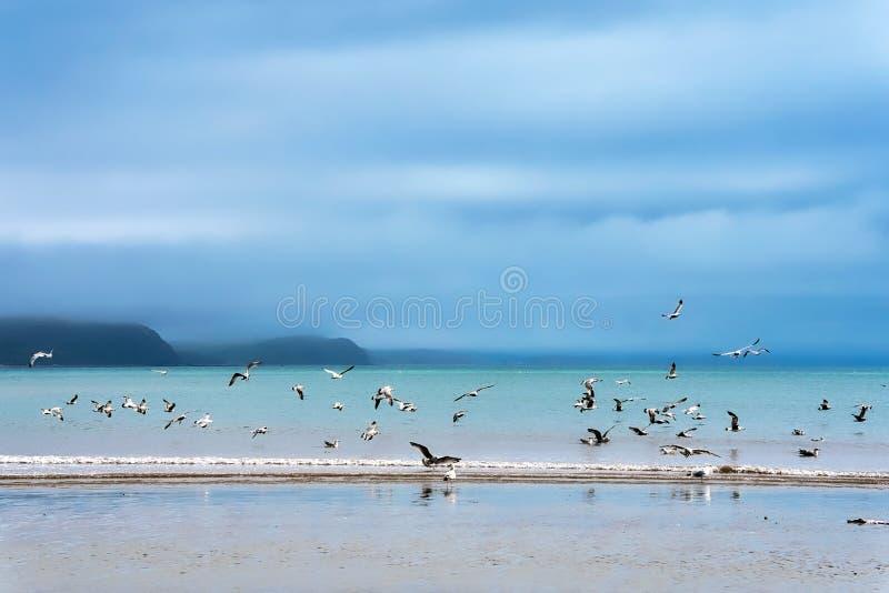 Seagulls przy Niskim wiosna przypływem - Lyme Regis fotografia stock