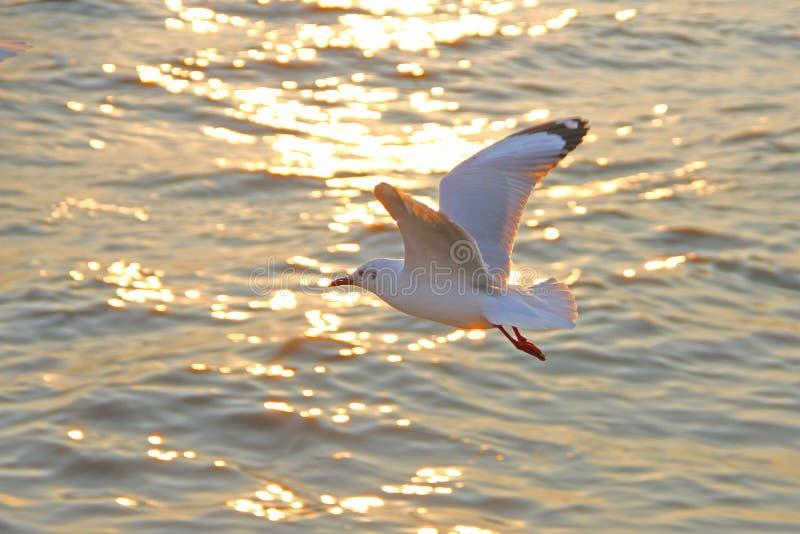 Seagulls przy uderzenia Pu nowy dom dla ciepły żyznego Popularni turystyczni miejsca przeznaczenia w Tajlandia zdjęcia stock