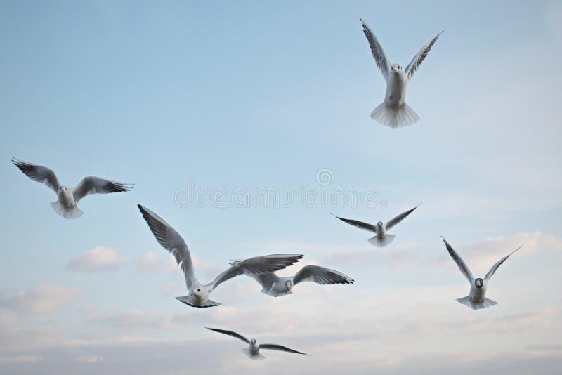 Seagulls ptaki w niebie obrazy royalty free