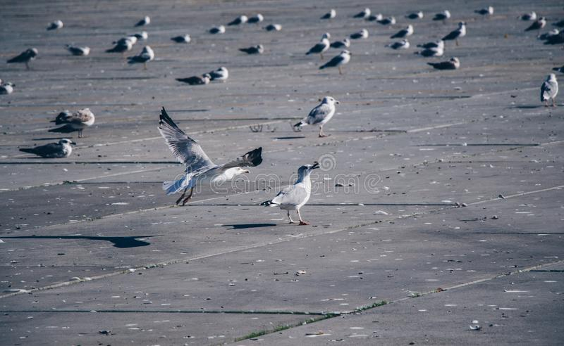 Seagulls are on rest on a concrete ground royalty free stock images