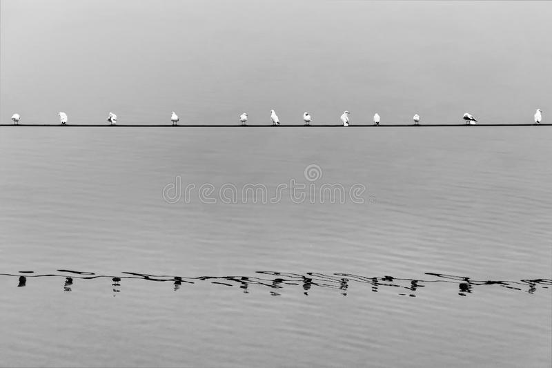 Seagulls resting on a line crossing the river stock photo