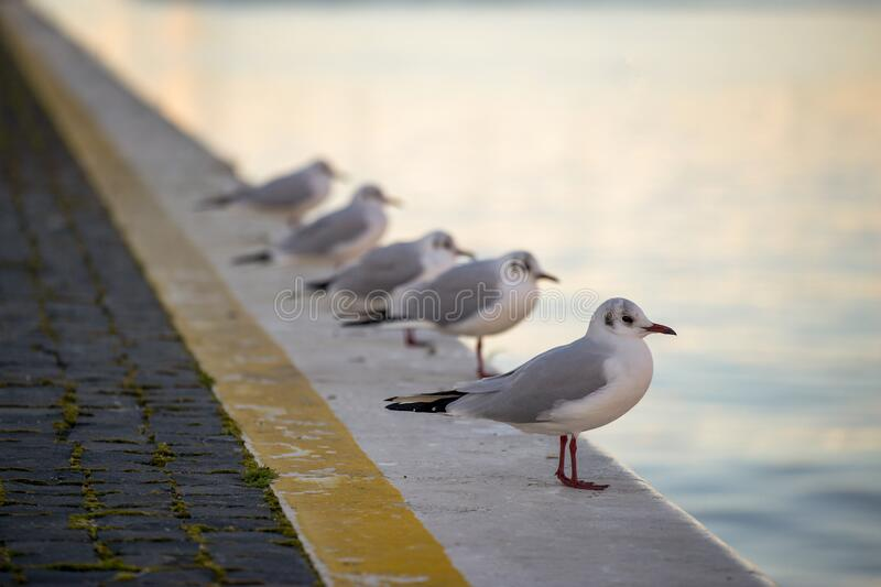 Seagulls resting on a quay in a port at dawn royalty free stock image