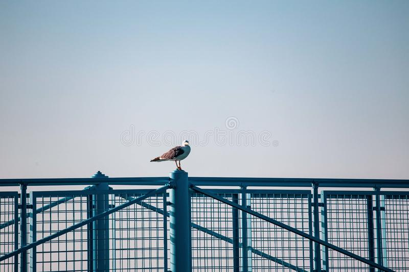 Seagulls resting on the railing of the pier or dock in a Riviera Romagnola Beach near Rimini and Riccione. italian summer.  stock photos