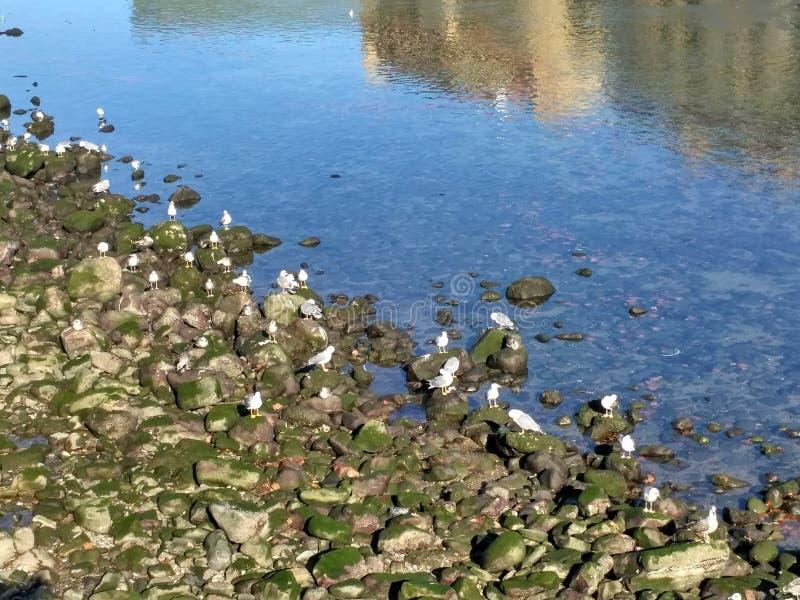 Seagulls & rocks stock photography