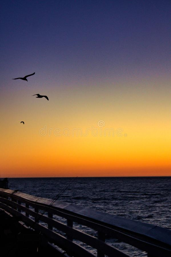 Seagulls During San Clemente Pier Sunset royalty free stock image
