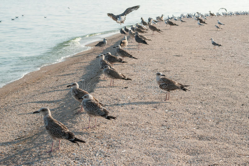 Seagulls on the sand