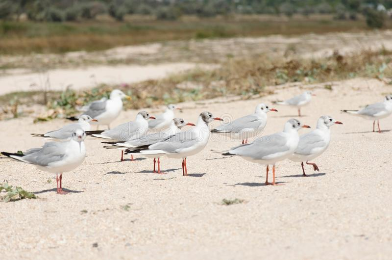 Seagulls on a sandy beach close-up stock photo