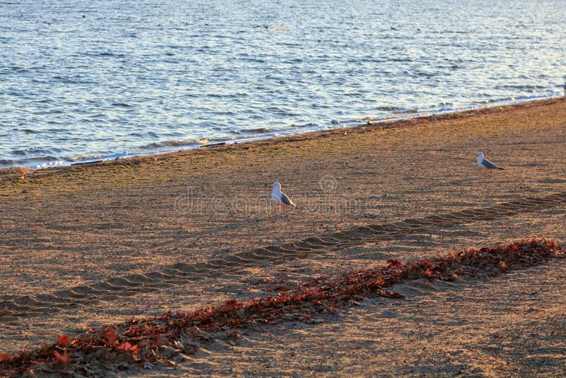 Seagulls on sandy Beach stock photo