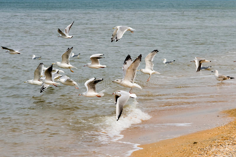 Download Seagulls and the sea. stock photo. Image of coast, bird - 11282136
