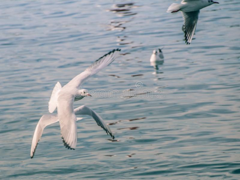 Seagulls at sea. The sea cannot be without gulls. Silhouette of a man and the sea. Sea element. sky and water. pier. horizon. ornithology. the reflection in stock image
