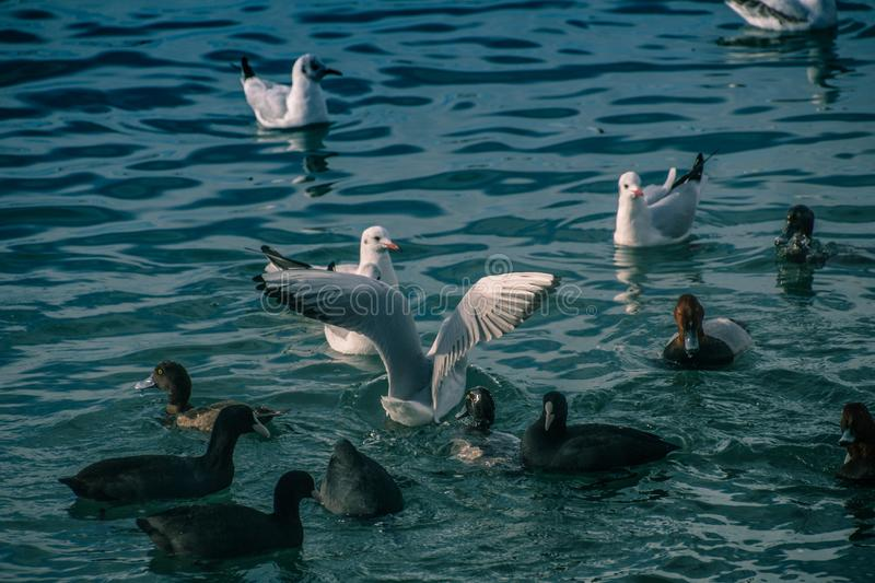 Seagulls at sea. The sea cannot be without gulls. Silhouette of a man and the sea. Sea element. sky and water. pier. horizon. ornithology royalty free stock images