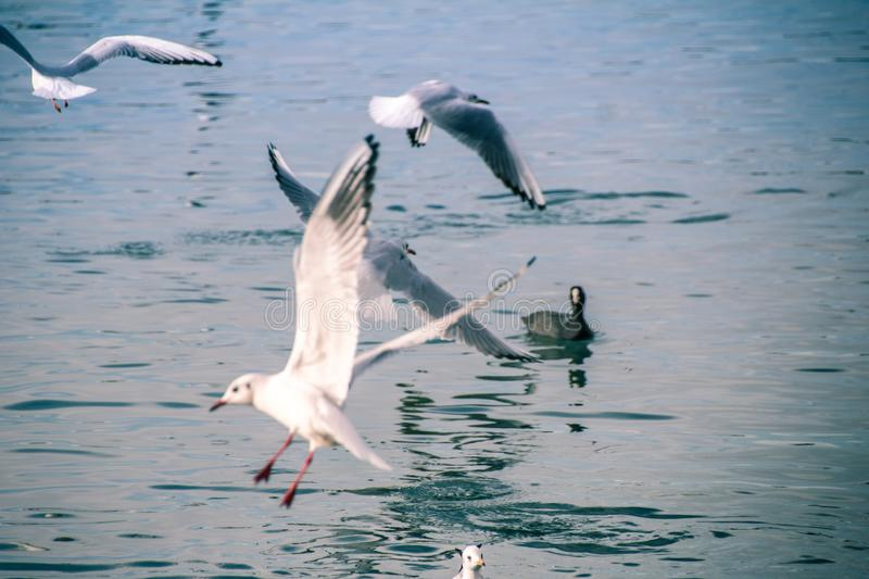 Seagulls at sea. The sea cannot be without gulls. Silhouette of a man and the sea. Sea element. sky and water. pier. horizon. ornithology. the reflection in stock images