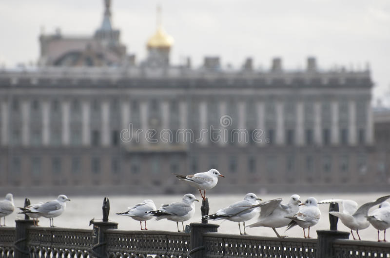 Seagulls Sitting On The Parapet Royalty Free Stock Photography