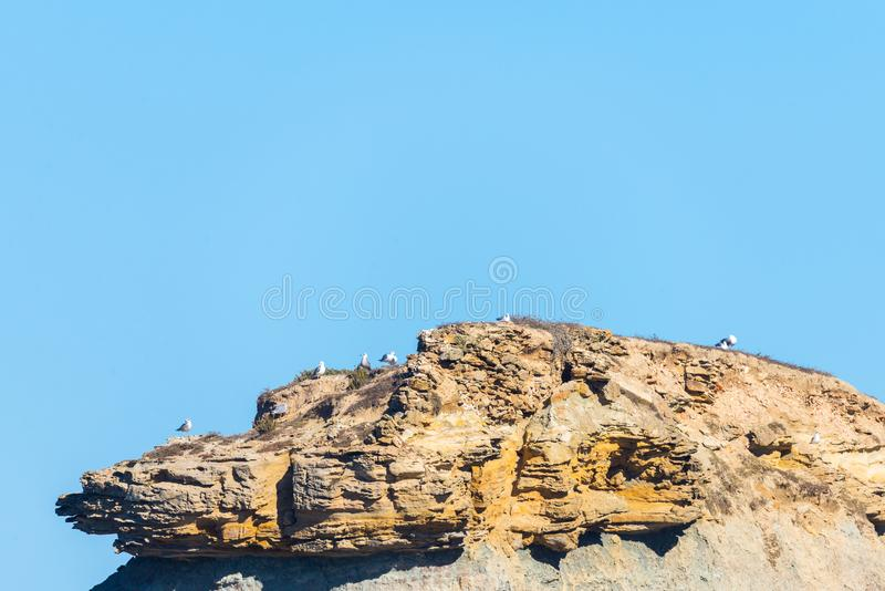 Seagulls sitting on top of a cliff against a blue sky with white clouds stock image
