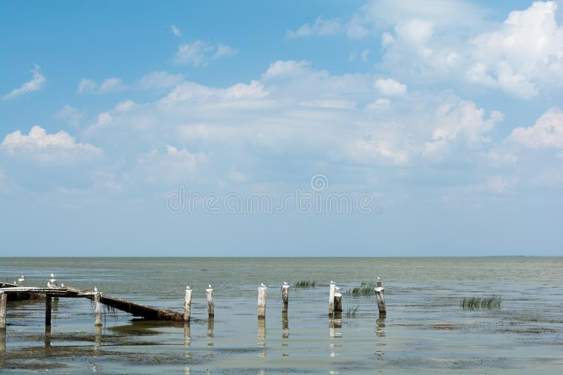 Seagulls sitting on wooden posts in sea beach. Summer seascape.  stock photography