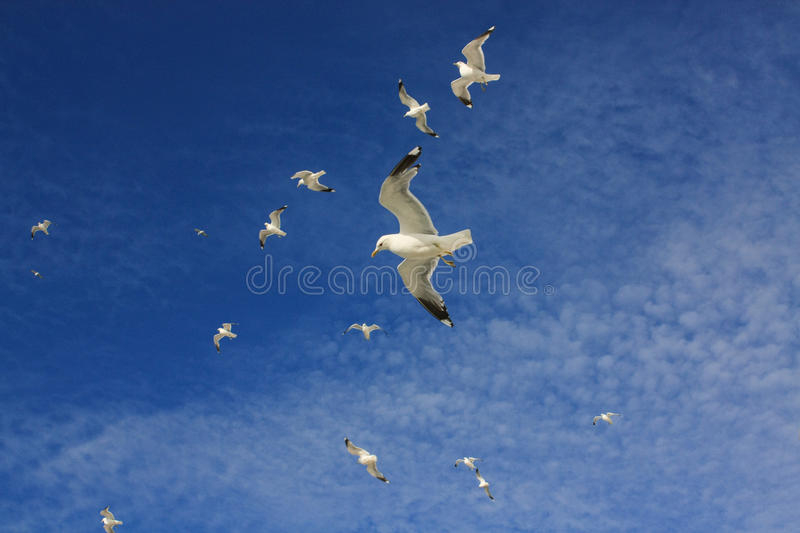 Seagulls in the sky stock photos