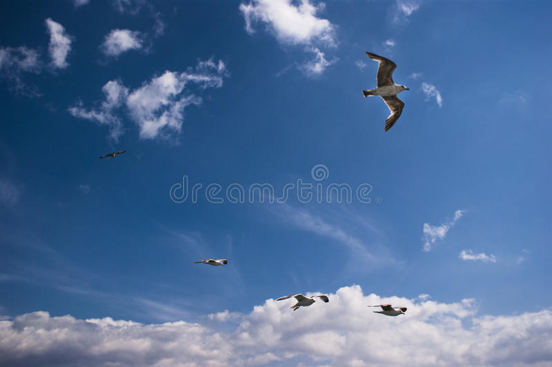 Download Seagulls are on sky stock image. Image of purity, high - 40823549