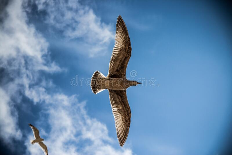 Seagulls in sky stock photos