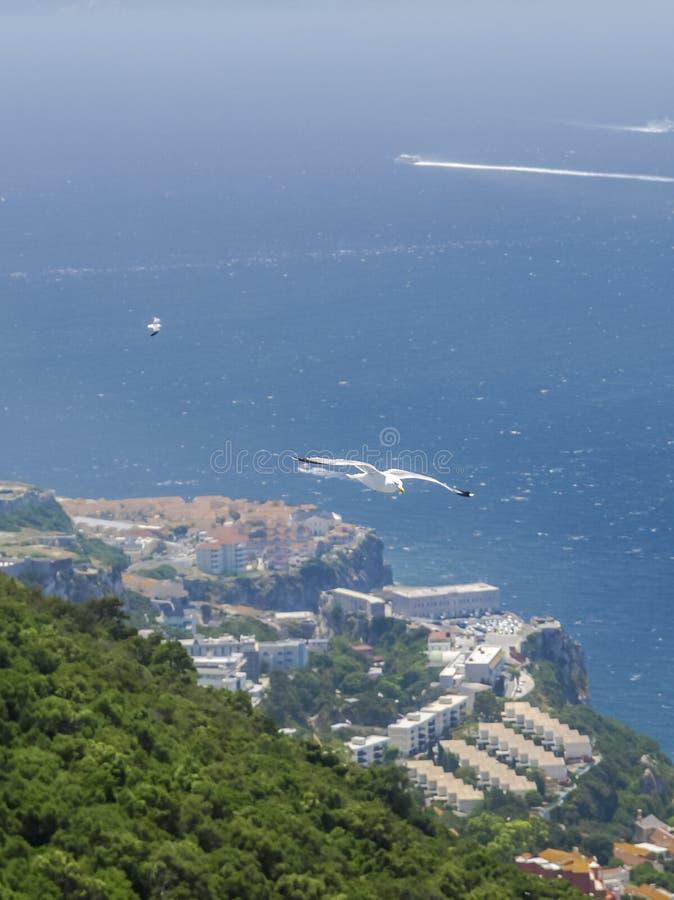 Seagulls som flyger över det Gibraltar berget royaltyfria foton