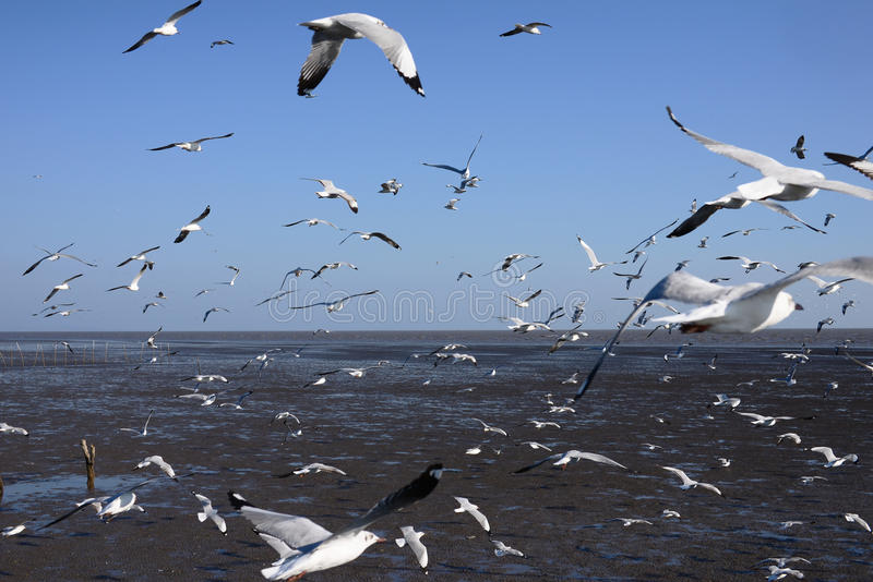 Seagulls som flyger i natur royaltyfri foto