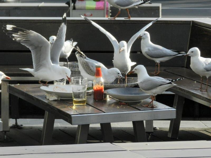 Seagulls som invaderar en tom tabell på en restaurang och äter resterna royaltyfria foton