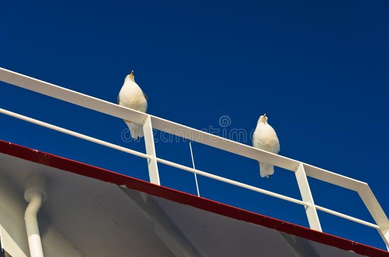 Seagulls som passangers för ett däck på en färja till den Thassos ön arkivbilder