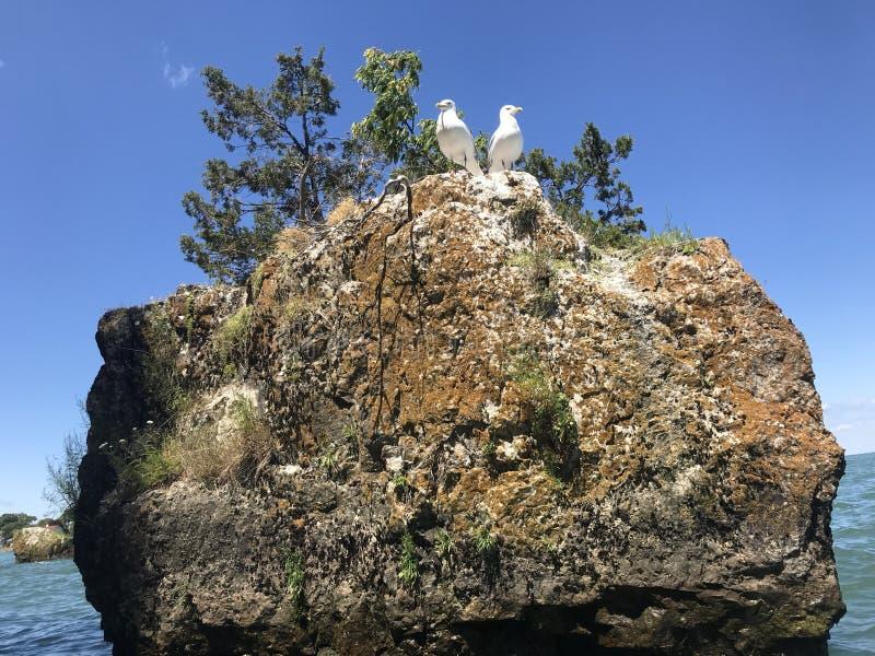 Seagulls som sätta sig på stenblocket arkivfoto