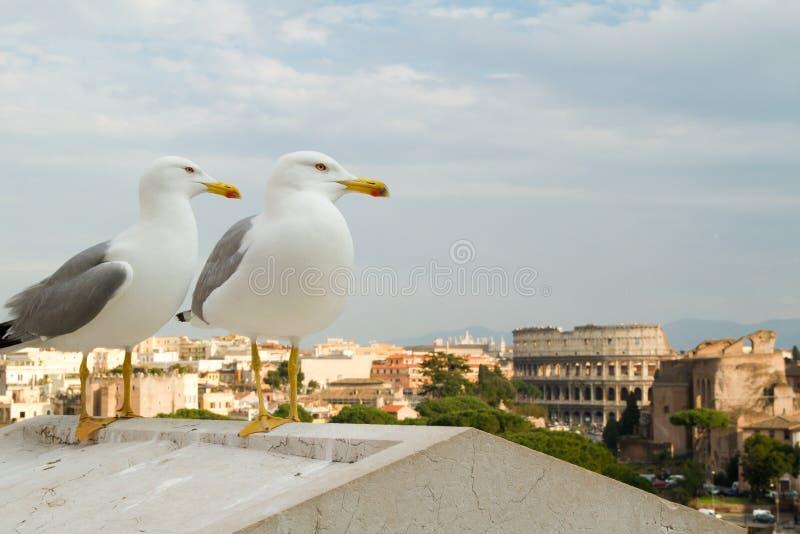 Seagulls som ser över Colosseumen arkivbilder