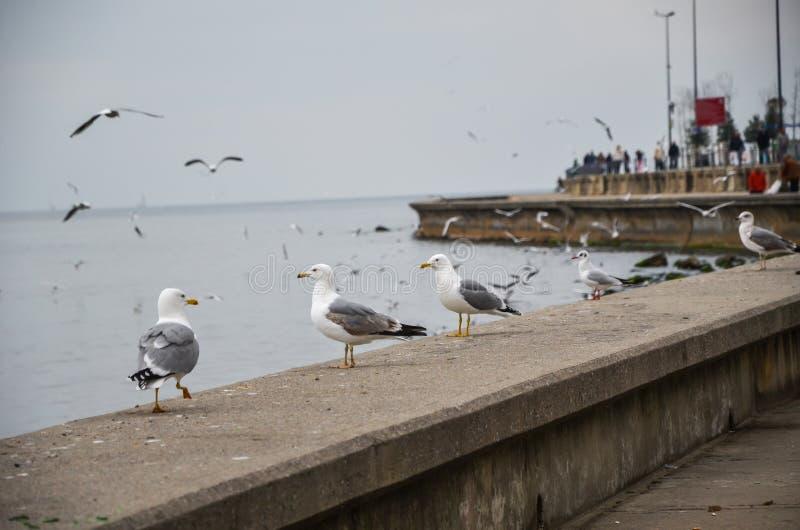 Seagulls som står på havskusten och flyger i himlen arkivbilder