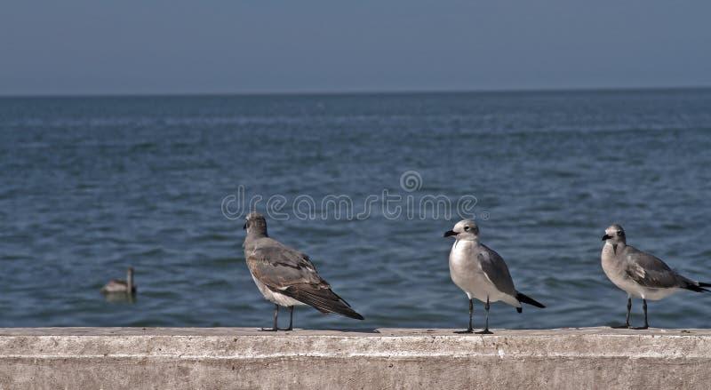 Seagulls som väntar i porten arkivbild