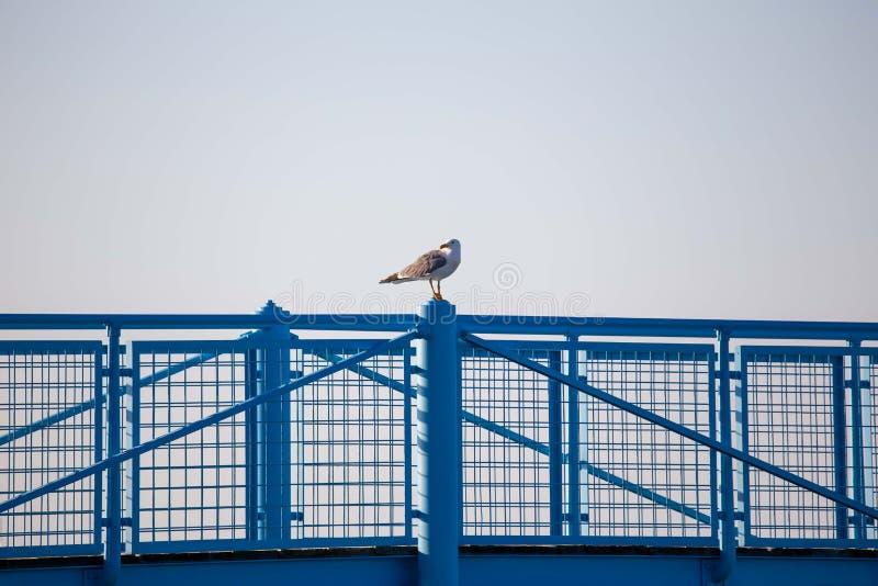 Seagulls som vilar på räcket av pir eller skeppsdockan i en Riviera Romagnola strand nära Rimini och Riccione Italiensk sommar royaltyfria bilder