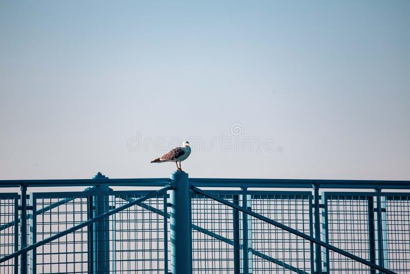 Seagulls som vilar på räcket av pir eller skeppsdockan i en Riviera Romagnola strand nära Rimini och Riccione Italiensk sommar arkivfoton