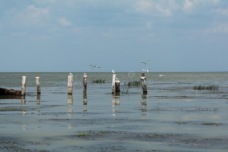 Seagulls some flying and other sitting on wooden posts in sea beach. Summer seascape.  stock photo