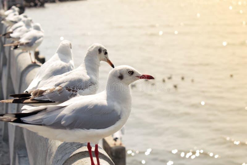 Seagulls stoi z rzędu patrzeć morze zdjęcie royalty free