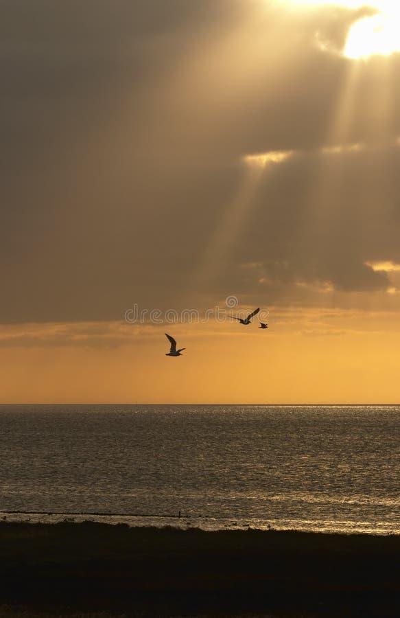 Download Seagulls in Sunbeam stock photo. Image of texel, postcard - 1348904