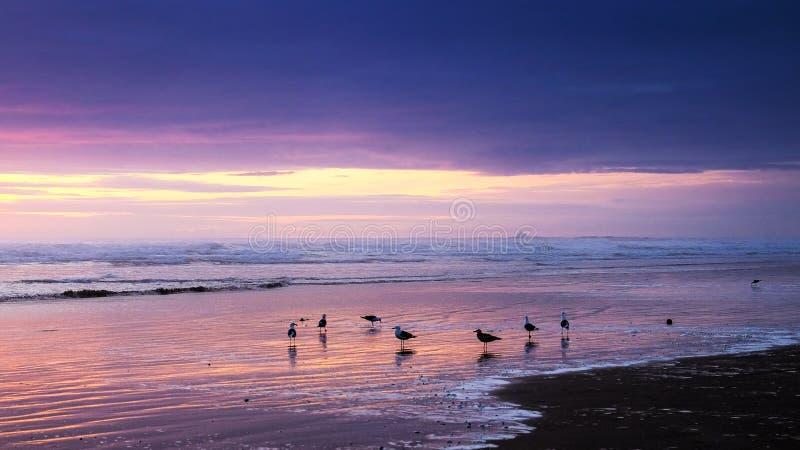 Seagulls at sunset stock image