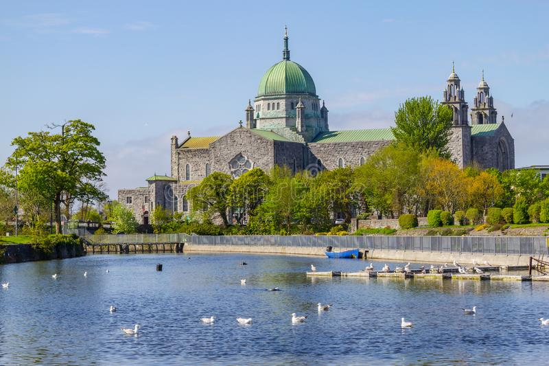 Seagulls swimming in Corrib river and Galway Cathedral royalty free stock photography