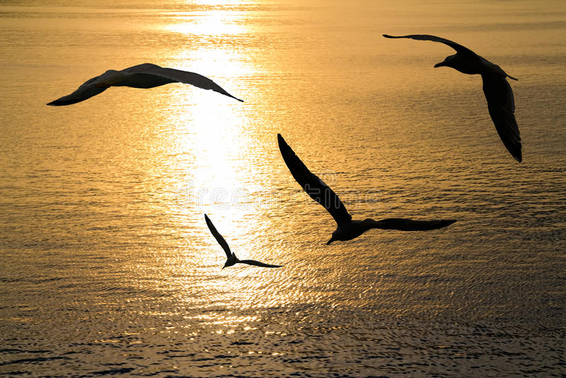 Seagulls target834_1_ obrazy royalty free