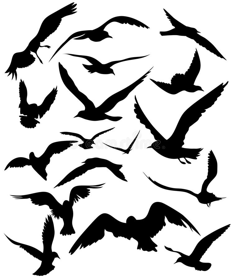 Download Seagulls vector stock vector. Image of white, collection - 24039452