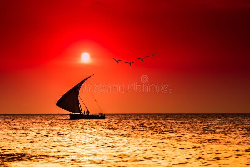 Seagulls w słońcu obrazy stock