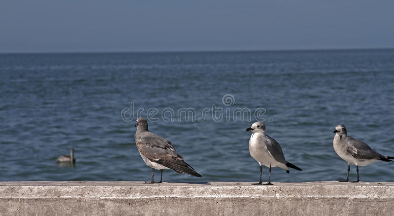 Seagulls Waiting in the Port stock photography