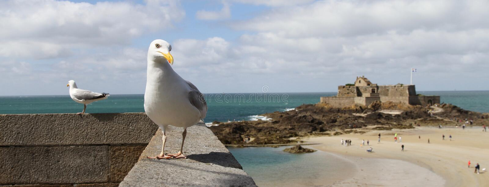 Seagulls on a wall with island and fort of Petit Be in the background in St Malo, France. Seagulls on a wall with island of Petit Be in the background, A stock image