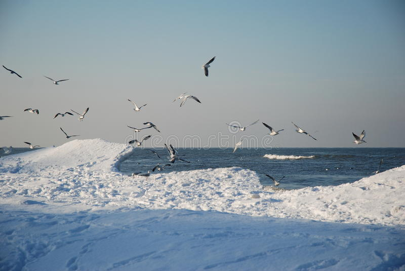 Seagulls in winter stock photos