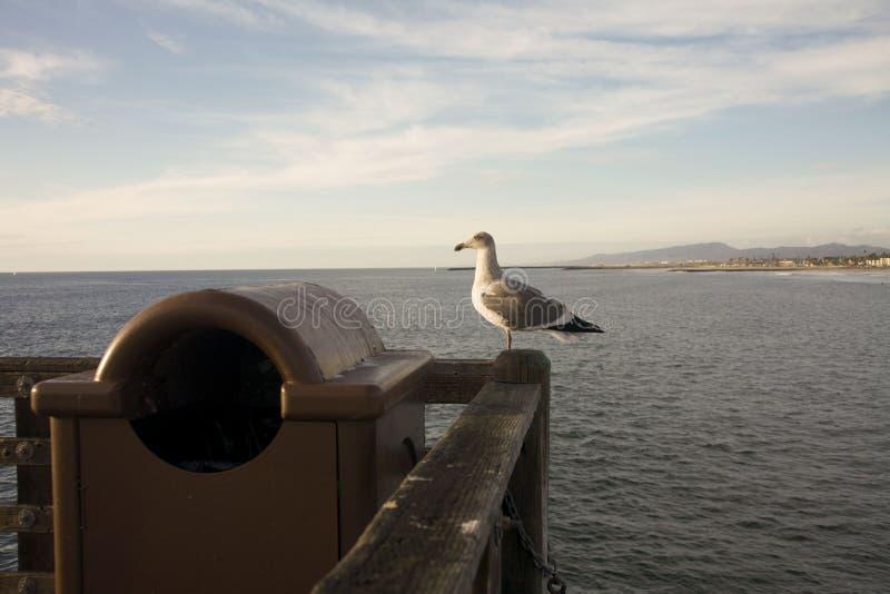 Seagullsammanträde på hörn av Pier Railing royaltyfri fotografi